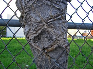 tree with fence